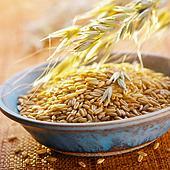 Biodegvielas uzbāšana veicina pārtikas cenu celšanos. Foto: AgroPols